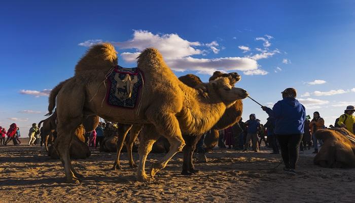 骆驼祥子十七章概括