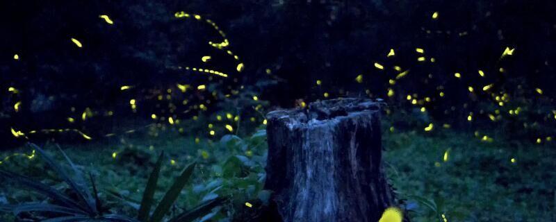萤火虫找朋友的故事