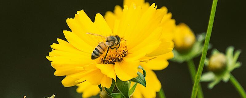 蜜蜂一课告诉了我们一个什么道理