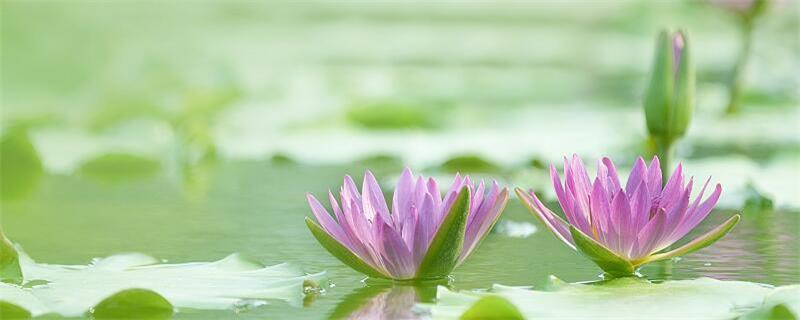 小池和池上描写的是哪个季节